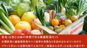 全国有機農法連絡会 野菜セット