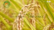 定期便・有機栽培や自然農法で育てたお米